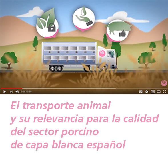 Video transporte animal